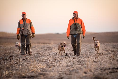 guided pheasant hunts with dogs
